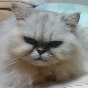 猫カフェ行ったことある?
