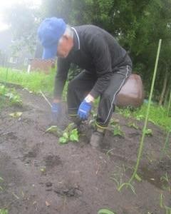 芋植え終わりです。