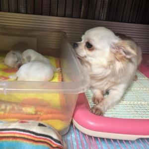 雪美ちゃん2匹産みました!