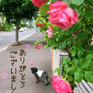 ★催事終了御礼&札幌まつり