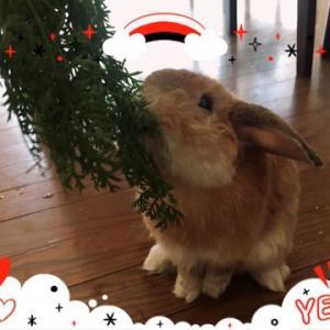 女子会に参加するメンズウサギさん