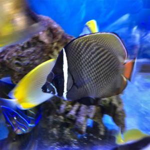 コラリスはほぼ完治…他の魚達は…