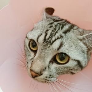 りおんさん、動物病院に行った結果。