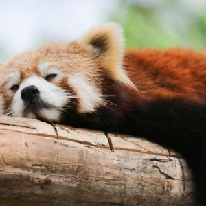 松原「 寝過ごしました 」