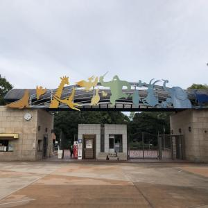 たした「千葉市動物公園へ」
