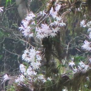 久々の高尾山では、花の名前を教わって来た そして帰宅後は気になる鳥と、開放花