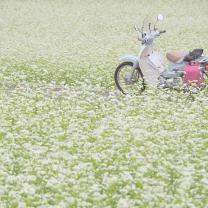蒜山でそばの花を見るぞ!ツーリング