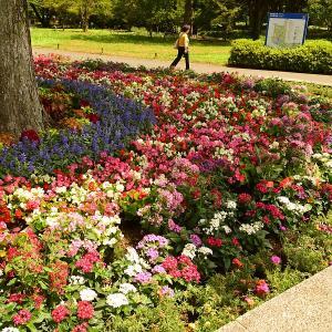 国営昭和記念公園(東京都立川市)1