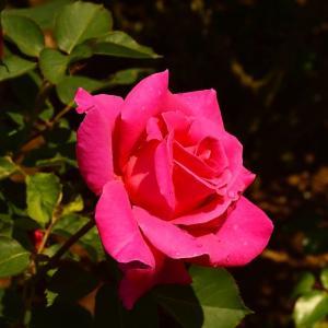 清水公園(千葉県)の「花のファンタジア」1