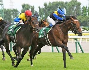 令和最初の夏競馬フィナーレ!新潟記念は金子馬のワンツー!小倉2歳Sはマイネルグリットが3連勝を決める!