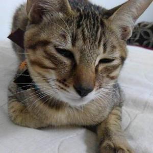 10/19譲渡会への参加猫(紹介)①