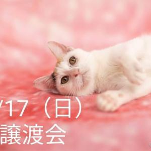11/17(日)譲渡会のお知らせ