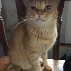 安満遺跡公園での地域猫イベントのご紹介