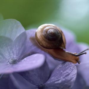 【紫陽花のひとり言】(後編)