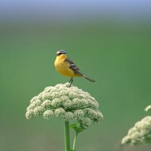 ♪愛らしい小鳥たちの妙技♪