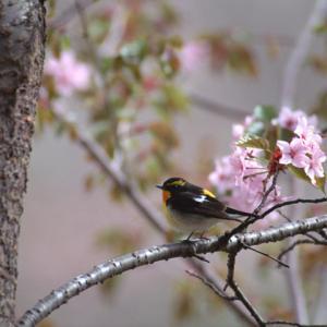 ♪陽を浴びる花鳥ハーモニー♪