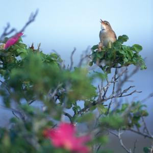 ♪花と小鳥の爽やかな朝♪