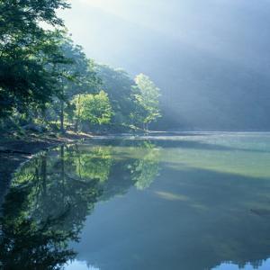 ♪水鏡~若葉の森♪