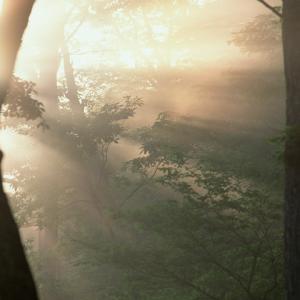 ♪朝の森~陽射しの世界♪