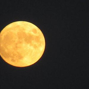 十四夜   中秋の名月は明日
