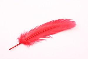 改めて知った羽の色