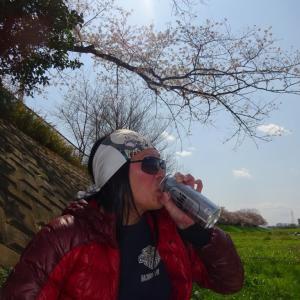 志木花見!2020第二段 近所の柳瀬川にて暴風だった昨日!