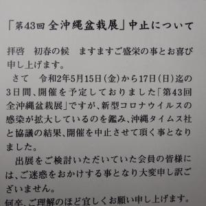 第43回全沖縄盆栽展中止のお知らせ