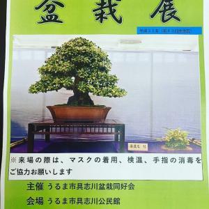 第45回盆栽展(うるま市具志川同好会)