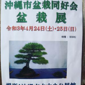第15回沖縄市盆栽同好会展示会、開催告知