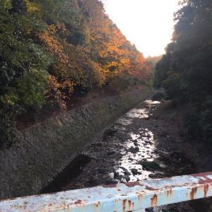 秋の散歩道その2