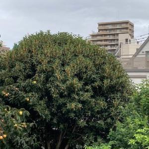 金木犀と彼岸花