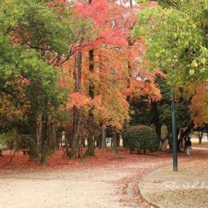 もう紅葉も終わりのようです。