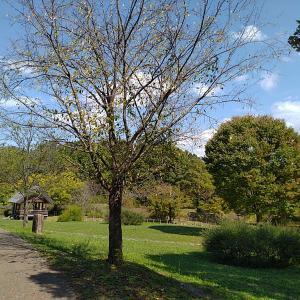 秋のピクニック馬見丘陵公園