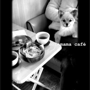 soramama café☆ダイソーミッフィーの割り箸