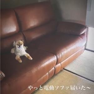 soramama☆ニトリ本革ソファ(ジャファー)