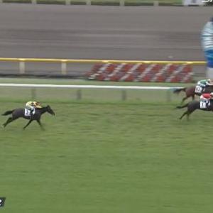 【競馬】ゴールドシップ産駒とキズナ産駒が新馬勝ち