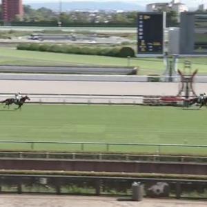 【競馬】阪神ジャンプSは平沢騎乗のタガノエスプレッソが6年ぶりの重賞V 単勝1.5倍のフォイヤーヴェルクは7着に敗れる