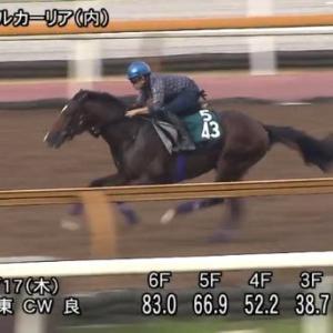 【競馬】モーザリオがいよいよ今週中京でデビューへ