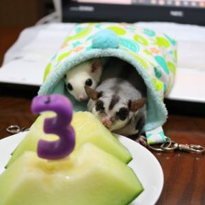 しゅくる3歳の誕生日