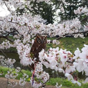 お花見 ~2019・春~