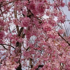 春の良き日に!!