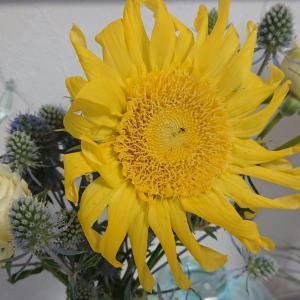 多様性と調和と。。。夏の花