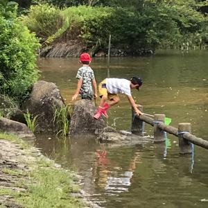 池へ魚をとりに