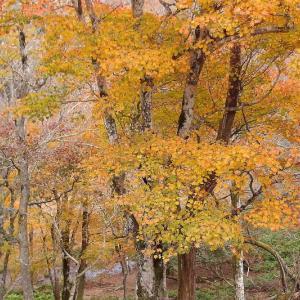 錦繍の森漫歩
