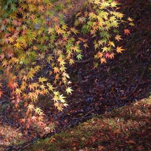 梅林の紅葉