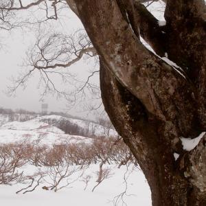 雪原を横切る