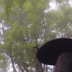 弘法大師の影