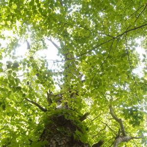 上を向いて緑