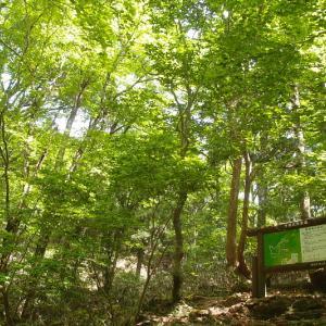 原生林×公園