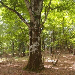 播磨の森に戻る